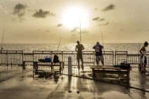 What saltwater fish can you catch off of a pier
